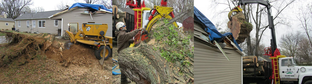 photos of tree services